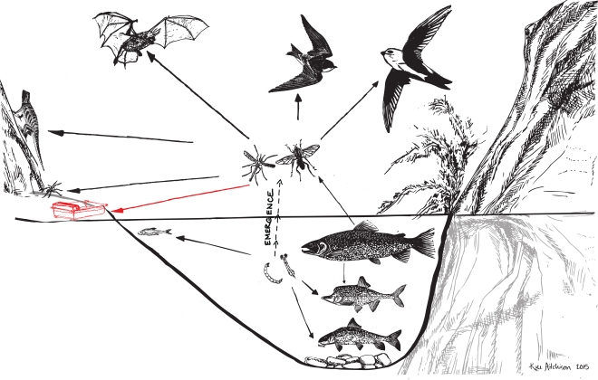 Food Web GCY copy