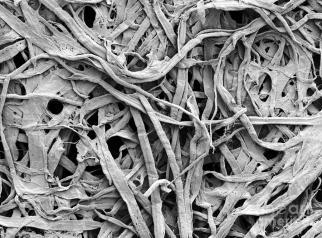 1-cellulose-fibers-in-a-paper-towel-scimat.jpg