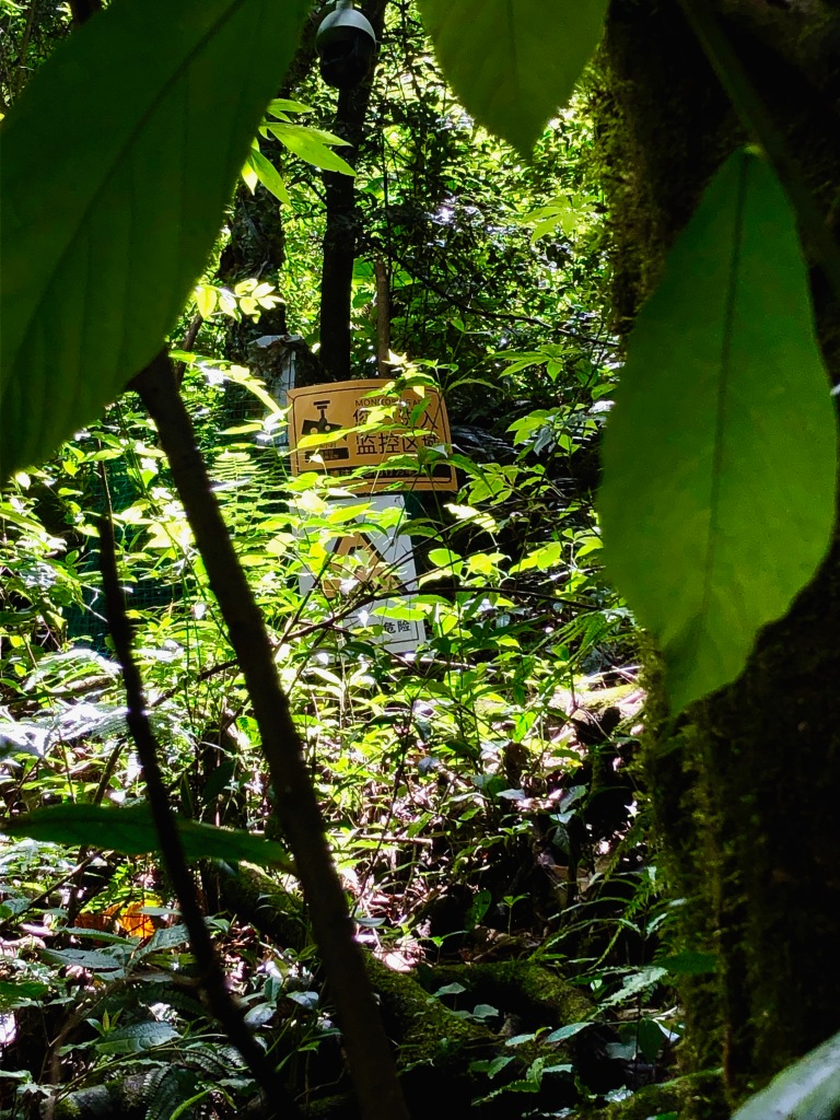 surveillance setups in the forests for monitoring Tianxing's activity